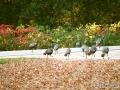 turkeys6-oct2013
