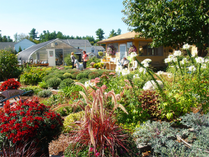 Pitarys Farm - Greenhouse and Garden Shop